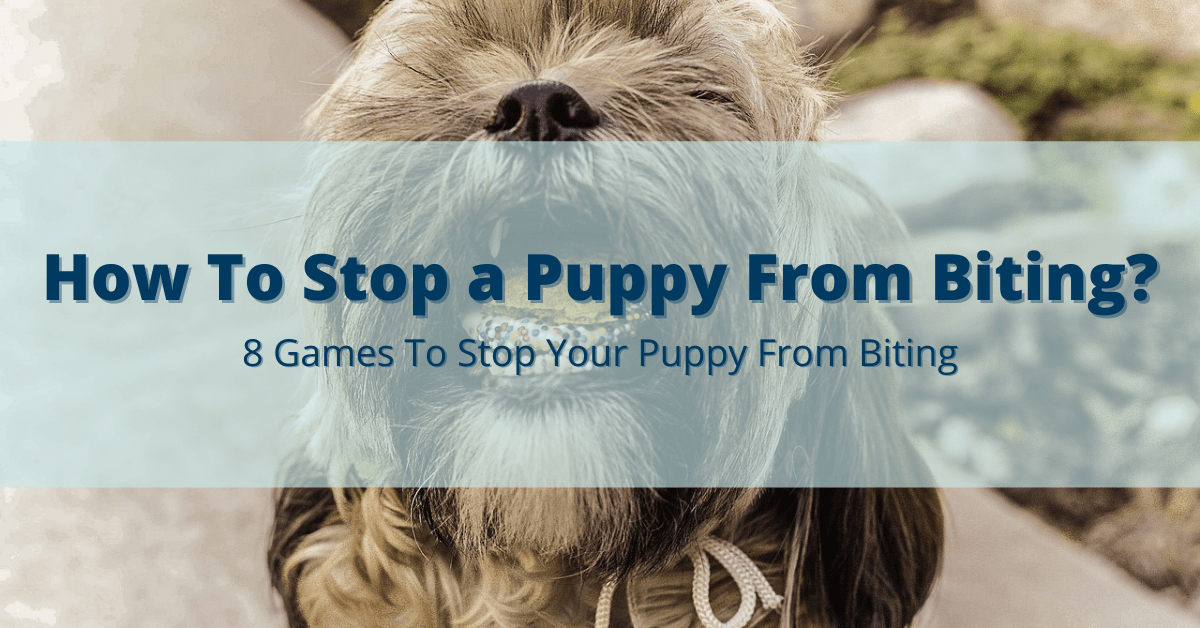 How To Stop a Puppy From Biting? 8 Games You Can Use To Stop Your Puppy From Biting