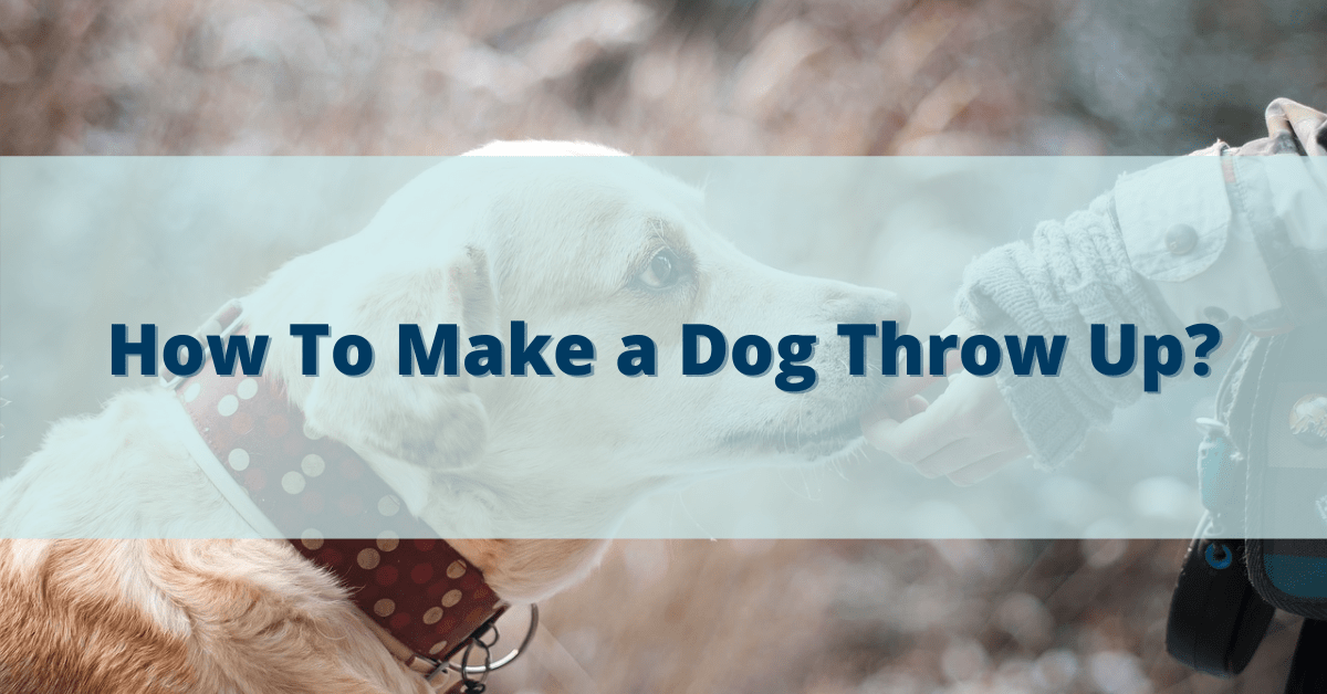 How To Make a Dog Throw Up?